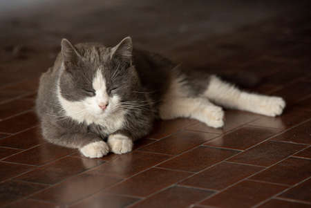 Cute gray cat rests lying on the floor