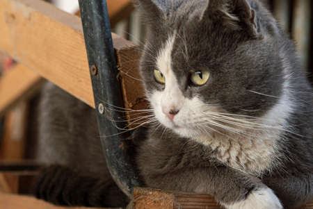 Cute cat portrait looking down with curious expression Imagens