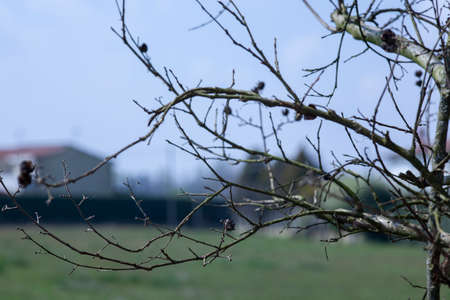 Detail of bare branches with blurred background in winter