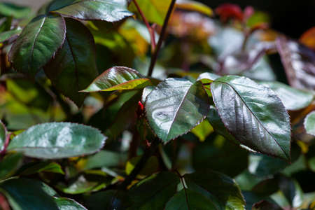 Detail of Leaves exposed at sun in spring time Imagens