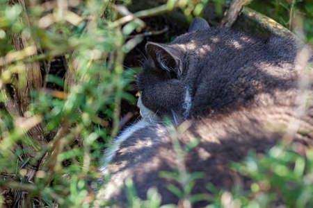 Cute cat sleeps nestled among the plants in the garden