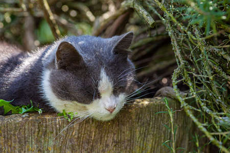 Cute cat sleeps nestled among the plants in the garden