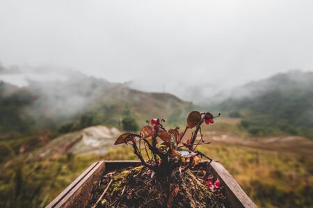 Close up of a small plant in focus behind mountains with clouds passing through them, a great background to show relaxation