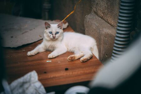 A white fluffy kitten tied up and left in the streets in Vietnam with black gunk around its eyes and nose - Typical for street cats Archivio Fotografico - 134423555