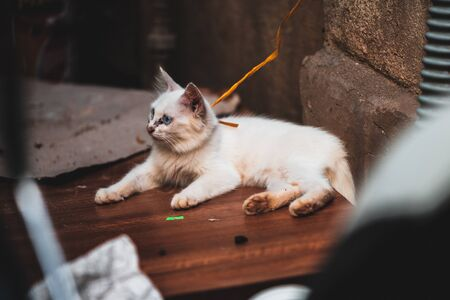 A white fluffy kitten tied up and left in the streets in Vietnam with black gunk around its eyes and nose - Typical for street cats Archivio Fotografico - 134423548