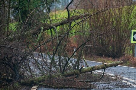 Fallen tree blocking the road in the peak district during Storm Ciara, UK. February 2020