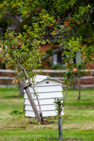White wooden beehive hut next to a apple tree growing red apples showing organic food being grown in the UK