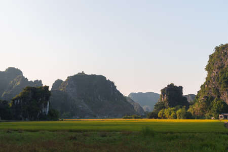 Limestone rocks behind rice terraces and fields full of flowers in Tam Coc, Ninh Binh, Northern Vietnam. Shot at Sunset