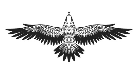 Soaring bird of prey. Vector illustration Illustration