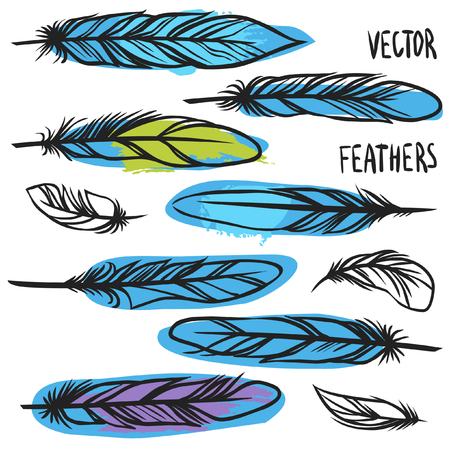bird feathers: Bird feathers. Vector collection