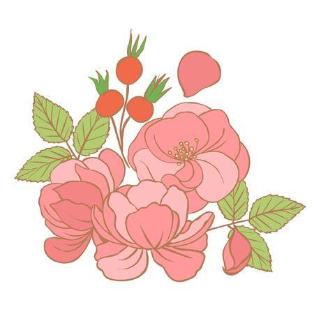 wild rose: Wild rose flowers. Hand drawn vector illustration