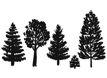 pine trees: Forest trees. Vector hand drawn illustration