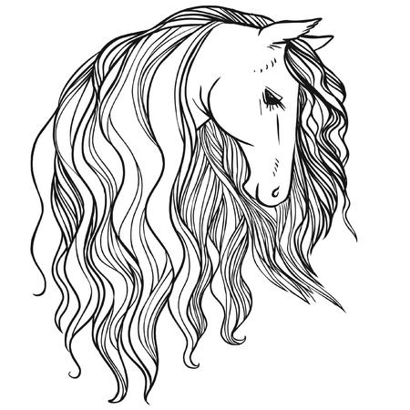 mane: Horses head with beautiful long mane. Vector hand drawn illustration Illustration