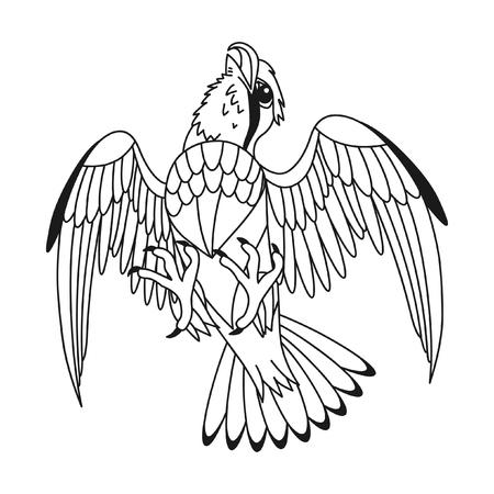 Bird of prey illustration.
