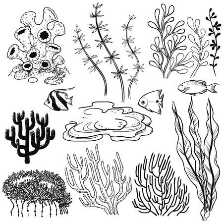 Plants and fish of a coral reef. Vector hand drawn illustration
