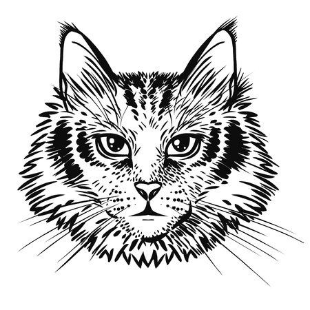 Fluffy cat head. Vector hand drawn illustration 일러스트