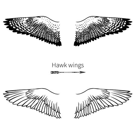 Falcon wings. Vector hand drawn illustration