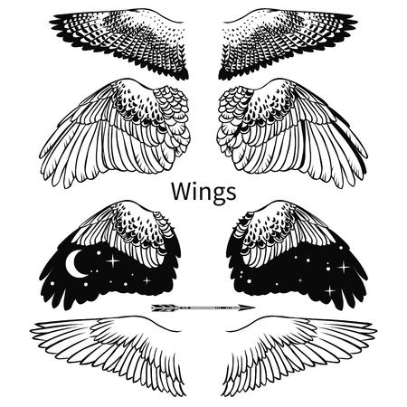 Ali di uccello. Illustrazione disegnata a mano di vettore