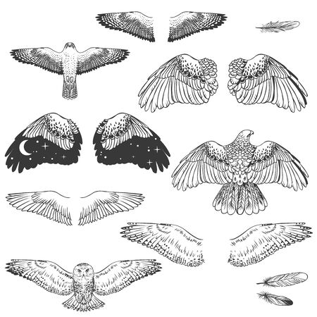 Birds of prey and their wings. Vector hand drawn elements