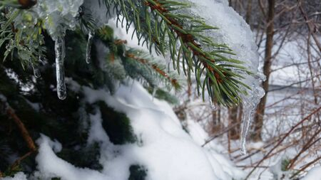 Branch with Ice and Snow with a Mountain Winter Background