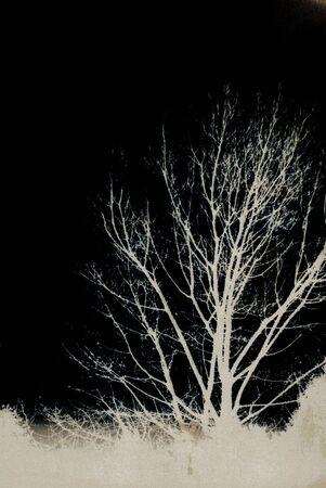 Grunge Trees on the dark photo