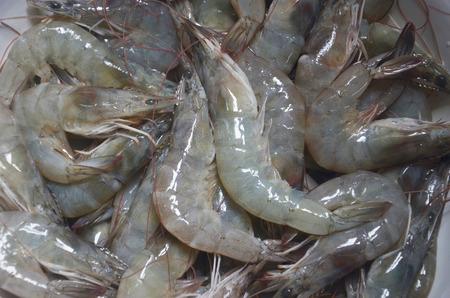 raw: raw shrimp Stock Photo