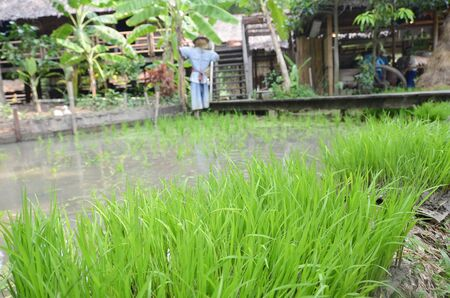 simulate: rice field simulate as learning center for young farmers