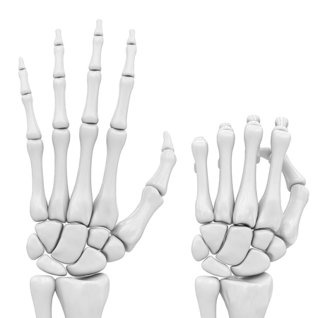 skeletal hand photo