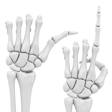 skeletal hand photo