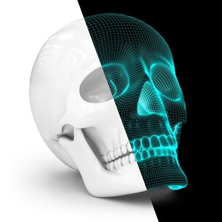 Skull Stock Photo - 15793112