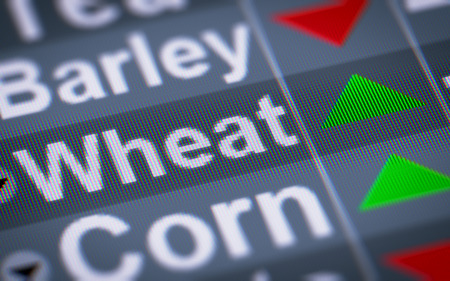 food supply: Wheat index of stock market. Up. Stock Photo