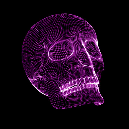 The mesh of the skull.
