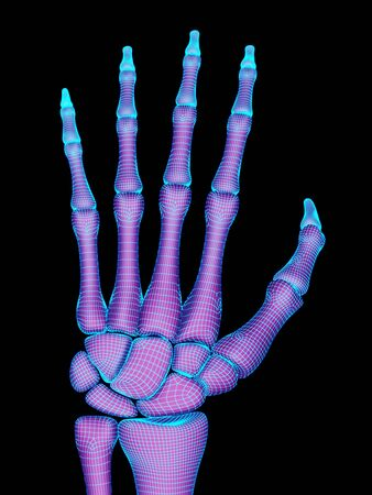The geometry of the skeletal hand. 3D Illustration.