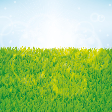 Summer green grass background. Seamless pattern vector for banner texture design for web, card, banner, spring, sale, flyer, pack, logo, web, vip exclusive certificate, gift luxury voucher, welcome. Illustration