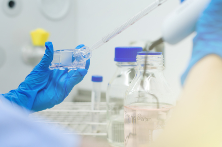Mano Mujer Científicos trabajando en cultivo de bacterias Frascos bajo campana estéril en laboratorio microbiológico Foto de archivo - 83279020