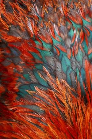 ornamentations: Gruppo di piuma marrone luminoso di alcuni uccelli Archivio Fotografico