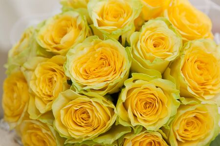 clr: Yellow roses. Bouquet from yellow roses close up. Stock Photo