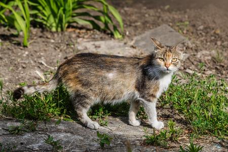 frisky: The cat runs on a lawn