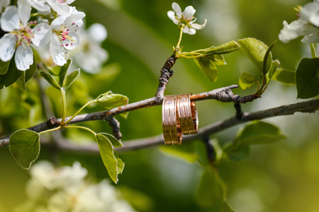 wedding decoration: wedding rings hang on a branch of the blossoming tree Stock Photo