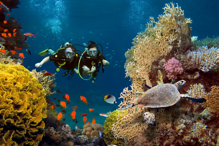 The loving couple dives among corals and fishes in the ocean photo