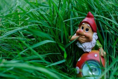 the gnome in a grass Stock Photo