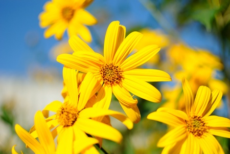 yellow flowers on a bed Stock Photo
