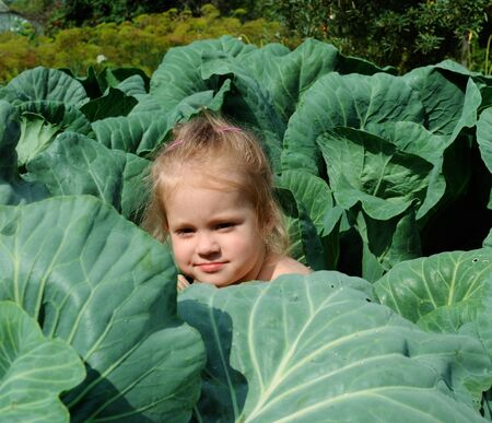 the girl in cabbage