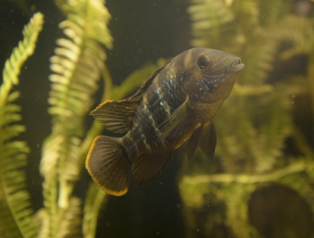 small fishes in an aquarium