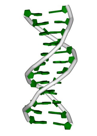 nucleic: rendering of a DNA double helix molecule Stock Photo