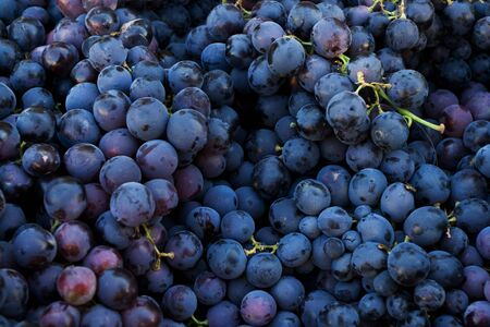 grape seed: Fresh dark red grapes at market place Stock Photo