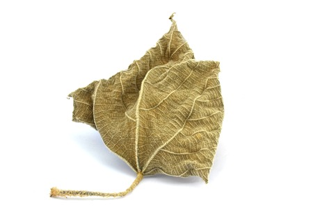 wither: Wither leaf in white background
