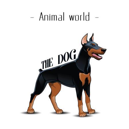 Animal World The Dog Doberman Background Vector Image Vettoriali
