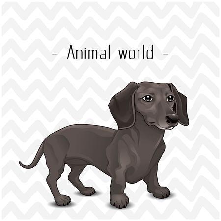 Animal World The Dog Dachshund Background Vector Image 일러스트