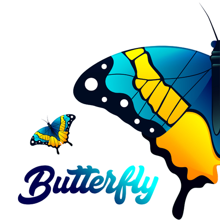 Yellow, Black, Blue colored Butterfly on White Background Vector Image